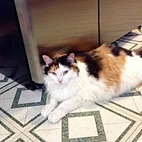 Adopt A Pet :: Diamond - Vineland, NJ
