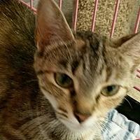 Adopt A Pet :: Daisy - Lexington, KY