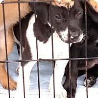 Adopt A Pet :: Jarren 2 - Savannah, GA