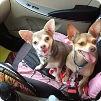 Adopt A Pet :: Mary & Bubba - dewey, AZ
