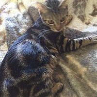 Adopt A Pet :: Lotus - Lodi, CA