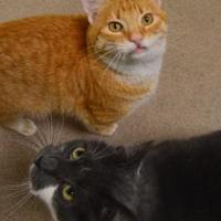 Adopt A Pet :: Nugget - Oshkosh, WI