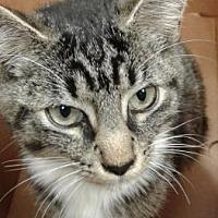 Adopt A Pet :: Smooch - Decatur, GA
