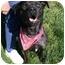 Photo 2 - Catahoula Leopard Dog Mix Dog for adoption in Auburn, California - Ben