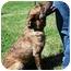 Photo 1 - Dutch Shepherd Mix Dog for adoption in Floyd, Virginia - Jenny