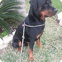 Adopt A Pet :: T-Roc - Seffner, FL