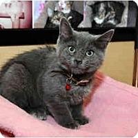 Adopt A Pet :: Gypsy - Farmingdale, NY
