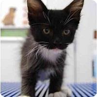 Adopt A Pet :: Pancho - Modesto, CA