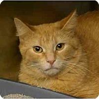 Adopt A Pet :: Grant - Lombard, IL