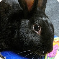 Dwarf Mix for adoption in Newport, Delaware - Keenan