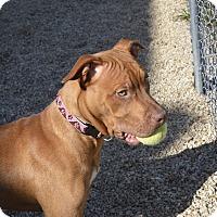Adopt A Pet :: Happy - Meridian, ID