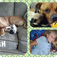 Adopt A Pet :: Nash - DOVER, OH