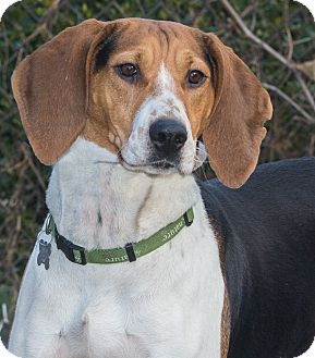Hound (Unknown Type) Mix Dog for adoption in Elmwood Park, New Jersey - Molly