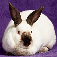 Adopt A Pet :: Willow - Lewisville, TX