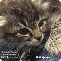 Adopt A Pet :: Mariposa - Temecula, CA