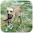 Photo 2 - Chihuahua/Whippet Mix Dog for adoption in San Pedro, California - Giselle