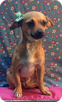 Chihuahua Mix Dog for adoption in Irvine, California - MARTINA