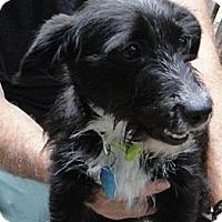 Adopt A Pet :: Heidi - Kingwood, TX