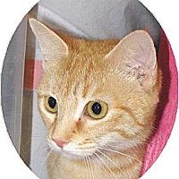 Adopt A Pet :: Katniss - Mobile, AL