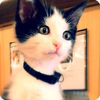 Adopt A Pet :: Leia - Green Bay, WI