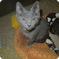 Adopt A Pet :: Velouria - Medina, OH