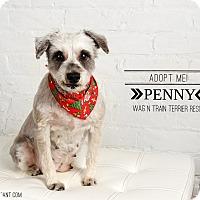 Adopt A Pet :: Penny-pending adoption - Omaha, NE