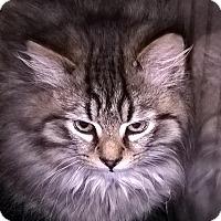 Adopt A Pet :: Liam - Delmont, PA