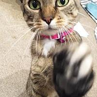 Adopt A Pet :: Minnie - Boca Raton, FL