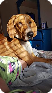 Hound (Unknown Type) Mix Dog for adoption in Ogden, Utah - Dewy