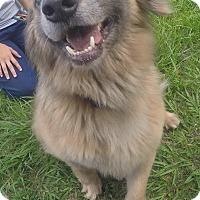 Adopt A Pet :: Dobby - Orlando, FL