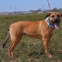 Adopt A Pet :: Gwen - Hereford, TX