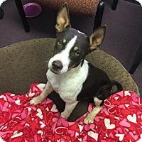 Adopt A Pet :: Buster - tucson, AZ