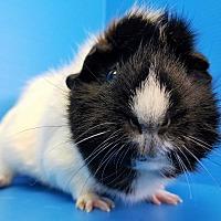 Adopt A Pet :: Phoenix - Lewisville, TX