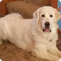 Adopt A Pet :: Daphne - Romeoville, IL