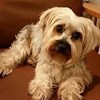 Adopt A Pet :: Hershey - Newfield, NJ