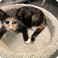 Adopt A Pet :: Bett - Murphysboro, IL