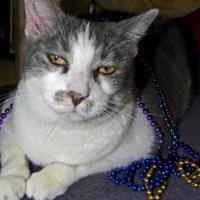 Adopt A Pet :: Figi - Converse, TX