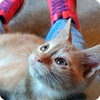 Adopt A Pet :: Taj - Armuchee, GA