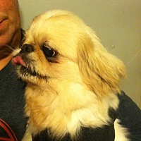 Adopt A Pet :: Ming - St. Louis Park, MN