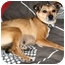 Photo 3 - Chihuahua/Feist Mix Dog for adoption in Latrobe, Pennsylvania - Annabelle
