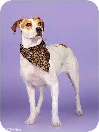 Terrier (Unknown Type, Medium) Mix Dog for adoption in Columbus, Georgia - Froggie 2554