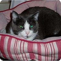 Adopt A Pet :: Sissy - Little Rock, AR