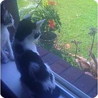 Adopt A Pet :: Willie - Mobile, AL
