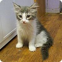 Adopt A Pet :: Patrick - Dover, OH