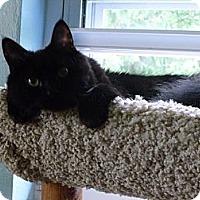 Adopt A Pet :: Tipper - Xenia, OH