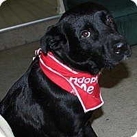 Adopt A Pet :: Tinker - Marlton, NJ