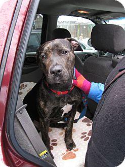 Hound (Unknown Type) Mix Dog for adoption in Voorhees, New Jersey - Lolita