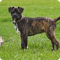 Adopt A Pet :: Lena - Homewood, AL
