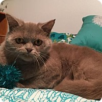 Adopt A Pet :: Chauncey - Beverly Hills, CA