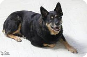Australian Cattle Dog Mix Dog for adoption in Yukon, Oklahoma - Lennie